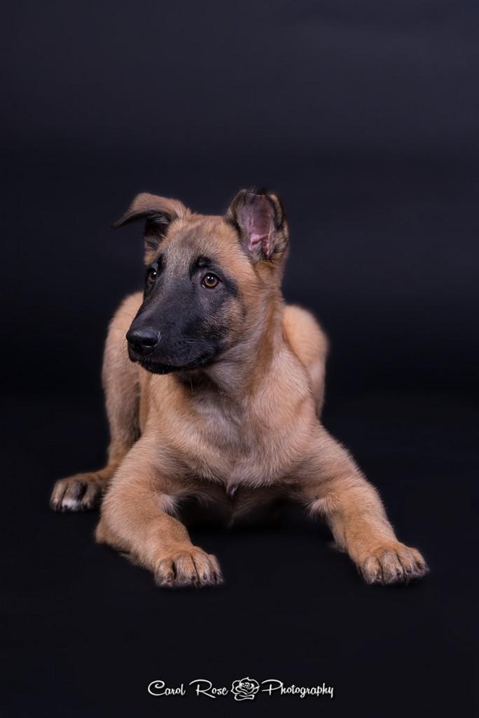 Tierfotograf Vogelsberg Hundefotograf