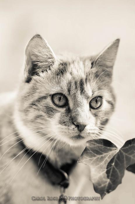 Haustierfotograf Vogelsberg Tierfotos Katzenfotos Tierfotografin Herbstein