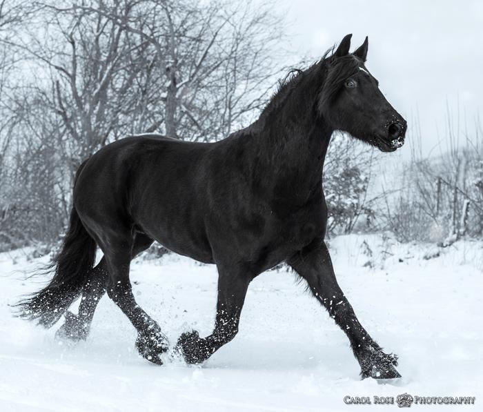 Pferdeportrait Pferdebilder Vogelsberg Pferdefotos