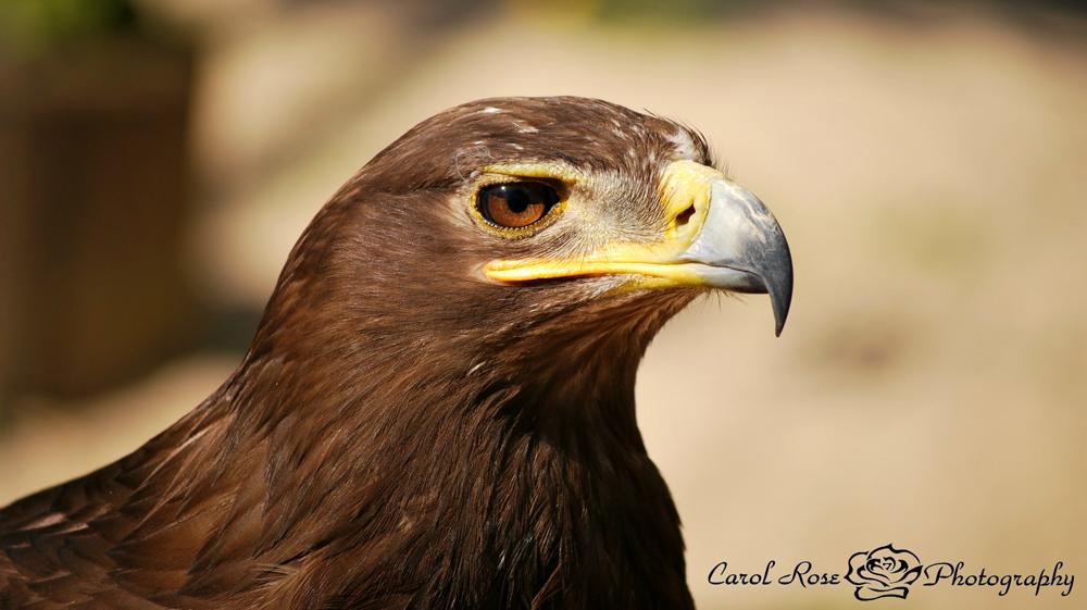 Vogelpark Schotten Fotografin Vogelsberg Tierfotografie Lauterbach Herbstein Tierfotoshooting