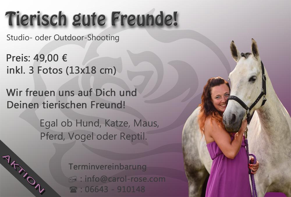 Foto-Aktion Fotoshooting-Aktion Vogelsberg Tierfotografie