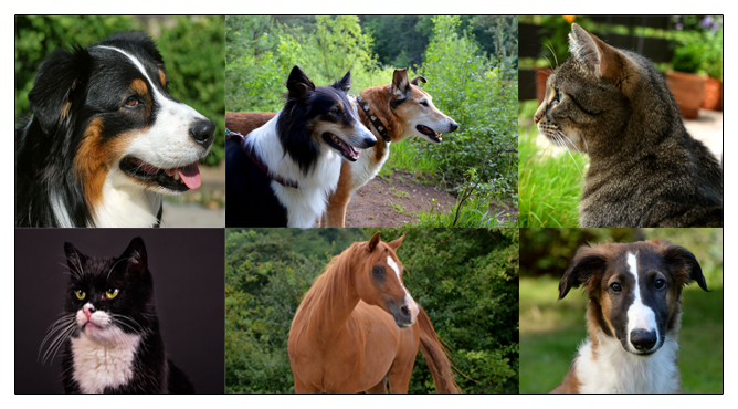 Tierfotografie Tierfotograf Vogelsberg Laubach, Lauterbach, Schotten, Herbstein, Fulda