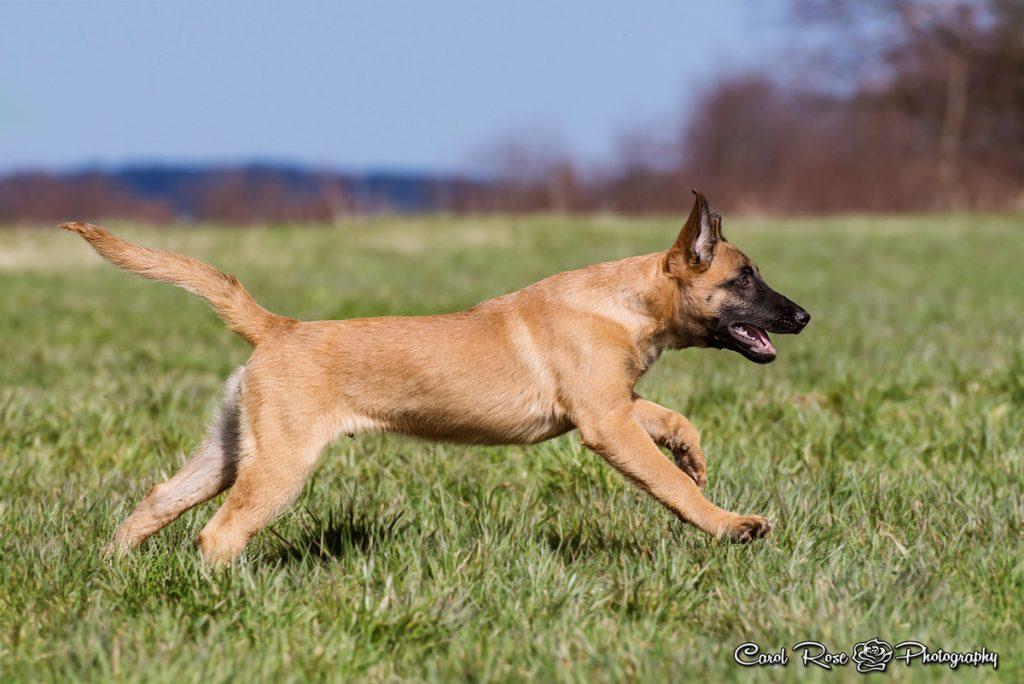 Tierfotoshooting Vogelsberg Hundefotograf Herbstein