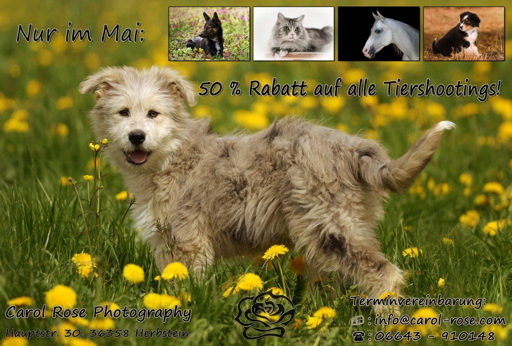 Tierfotoshooting Lauterbach Tierfotograf Schotten