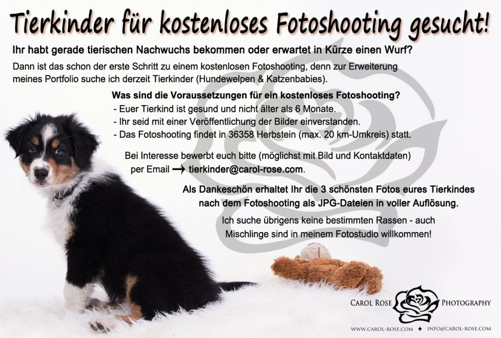 Tierportraits Fotograf Osthessen Tiertotograf Lauterbach